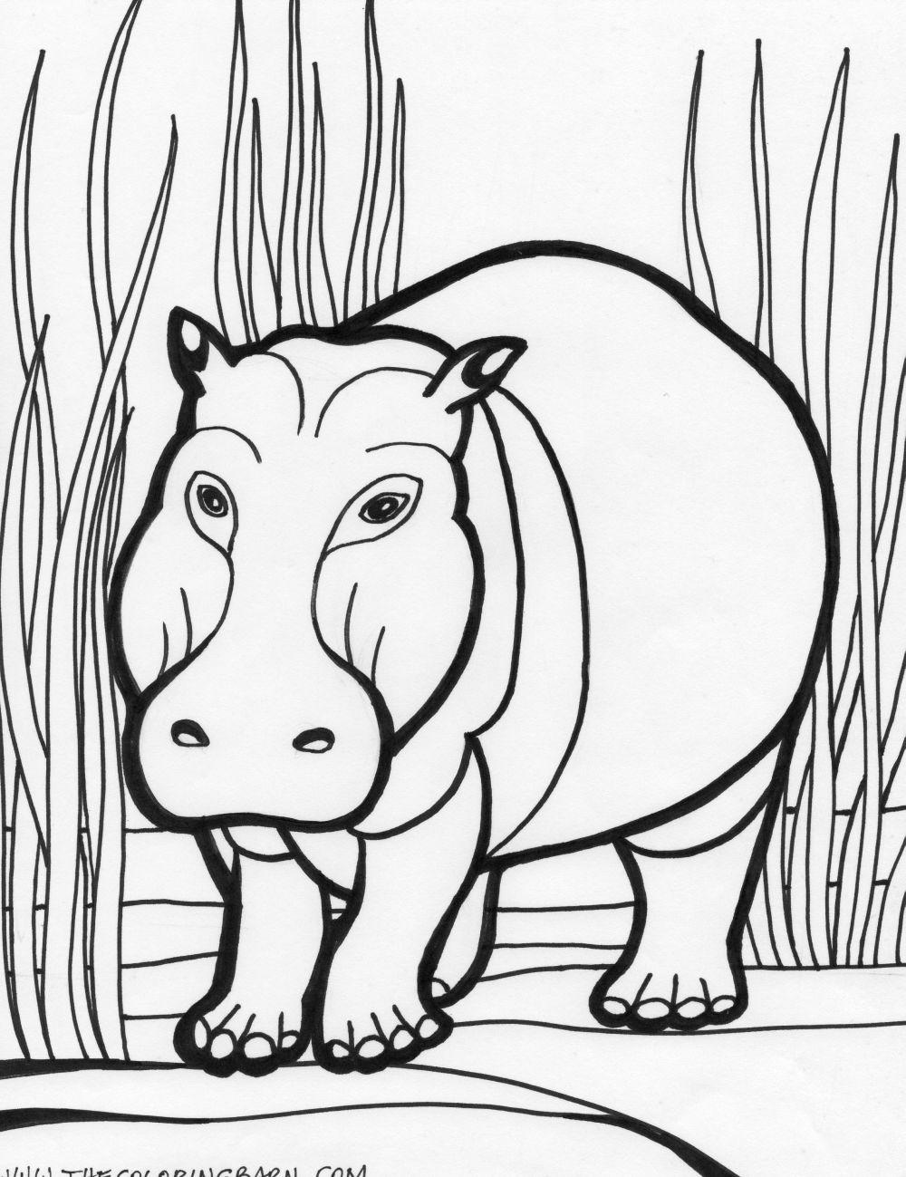 Hippopotamus Animals Coloring Pages