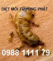 diet-moi
