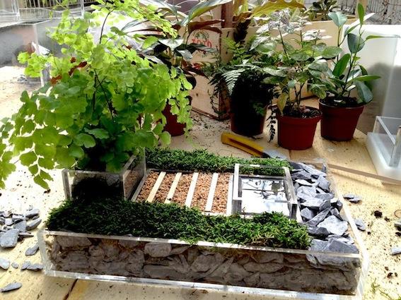 niwa box scatole trasparenti per giardino vendita on line