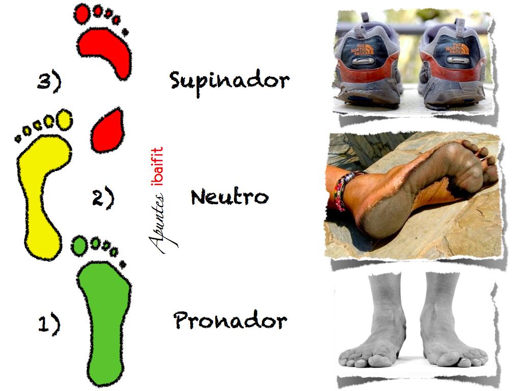 Anatomia de los pies a la cabeza (II) - Pierna. | Educación ...