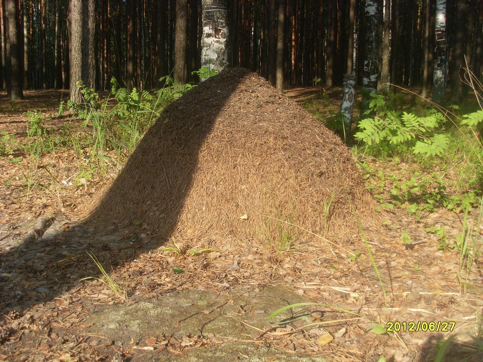 Как избавиться от муравьев в огороде 79