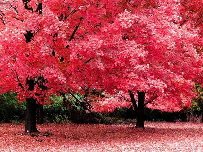 paisaje-de-otoño.jpg