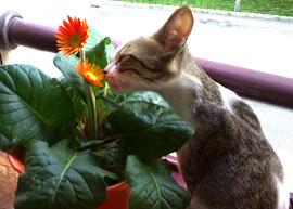 Mia... a minha gatinha.