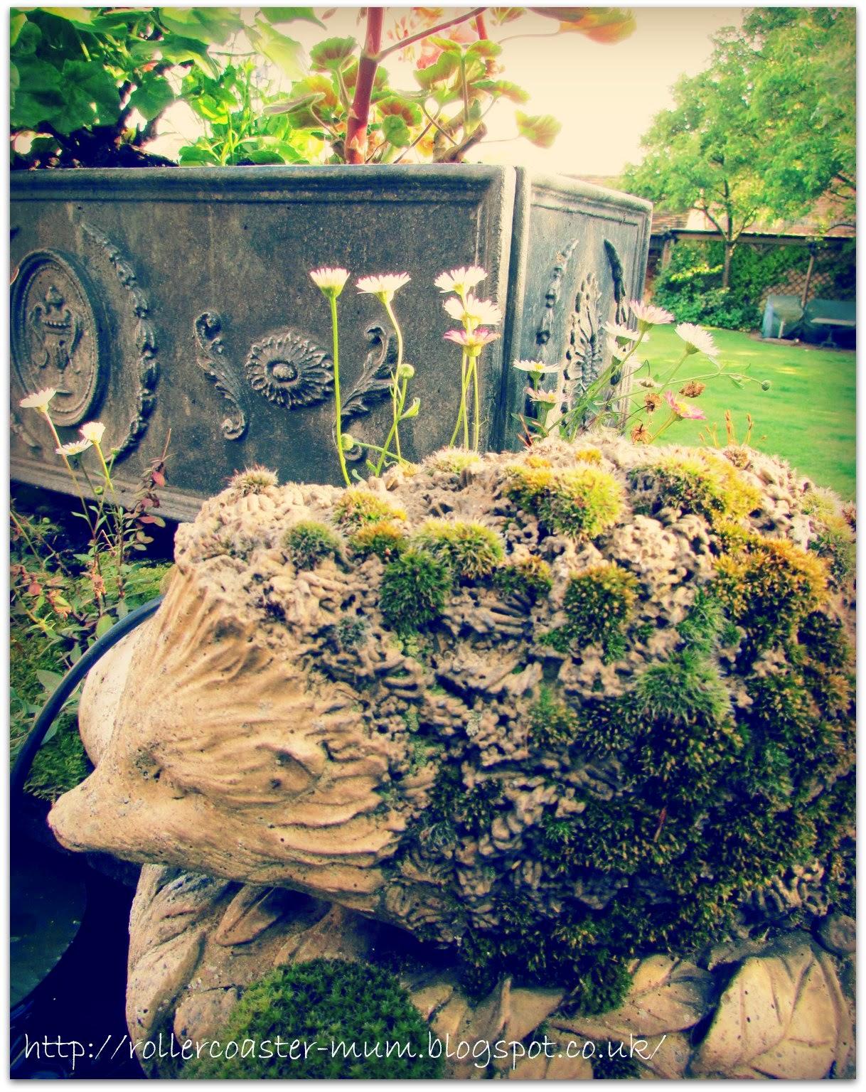 #alphabetphoto, stone Hedgehog