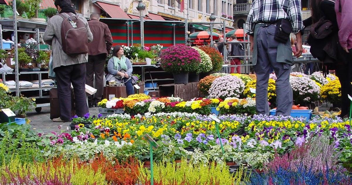 Jardineria eladio nonay brezo jardiner a eladio nonay - Jardineria eladio nonay ...