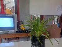 Pemanfaatan Limbah Sablon untuk Pot Tanaman