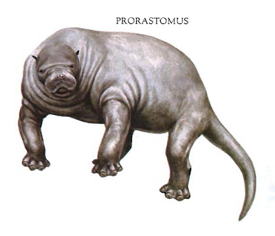 sirenidos prehistoricos Prorastomus
