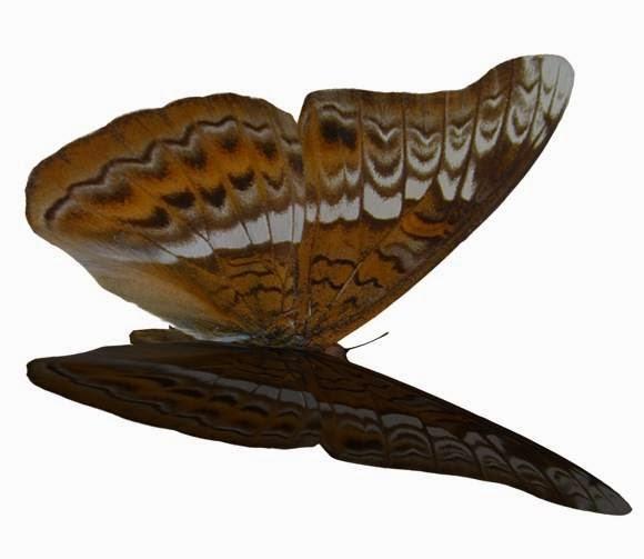 Stock Foto Gambar Kupu-kupu High Resolution