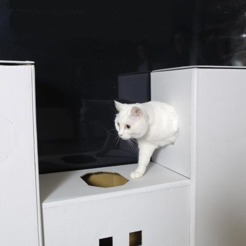 DIY貓咪塔屋 示意圖