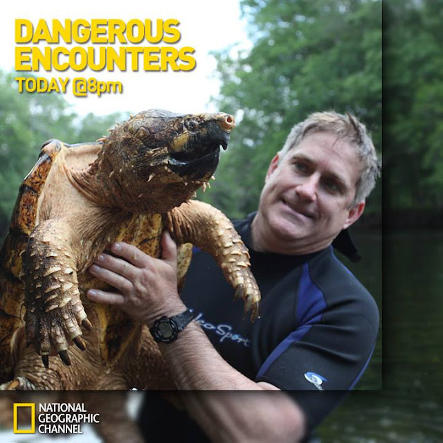 Worlds Most dangerous animals,Most dangerouse Beast in Universe,National Geographic dangerous animals pics