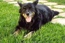 Pretinha - a nossa querida amiga canina