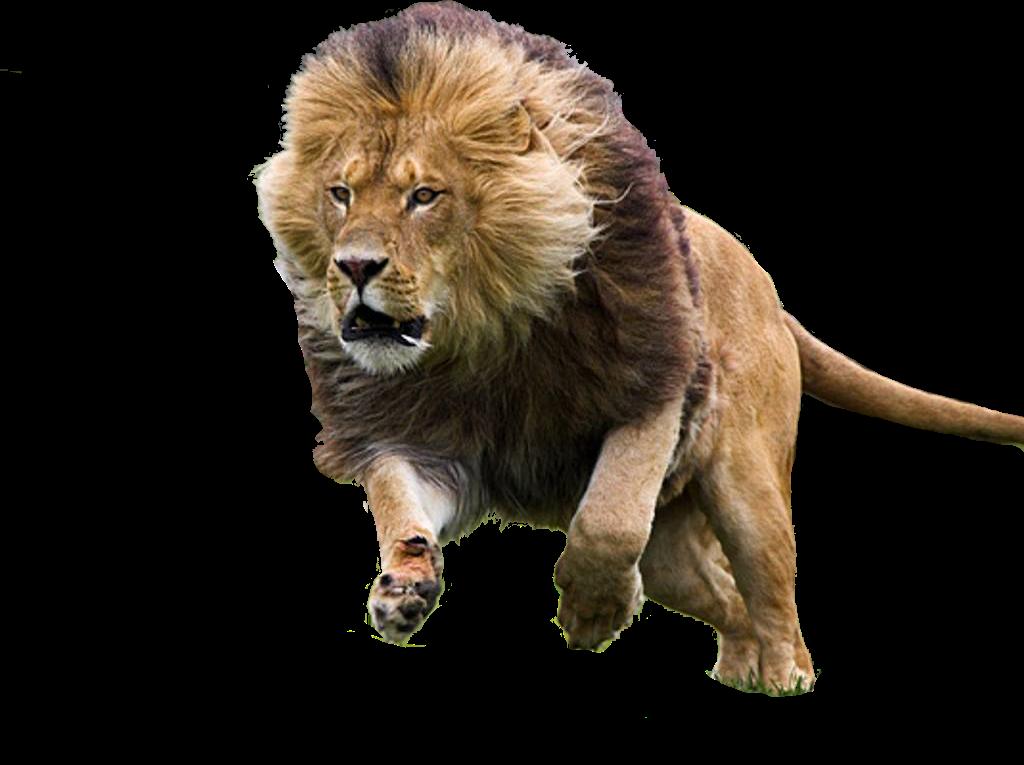 marcos para fotos png: animales png Lion