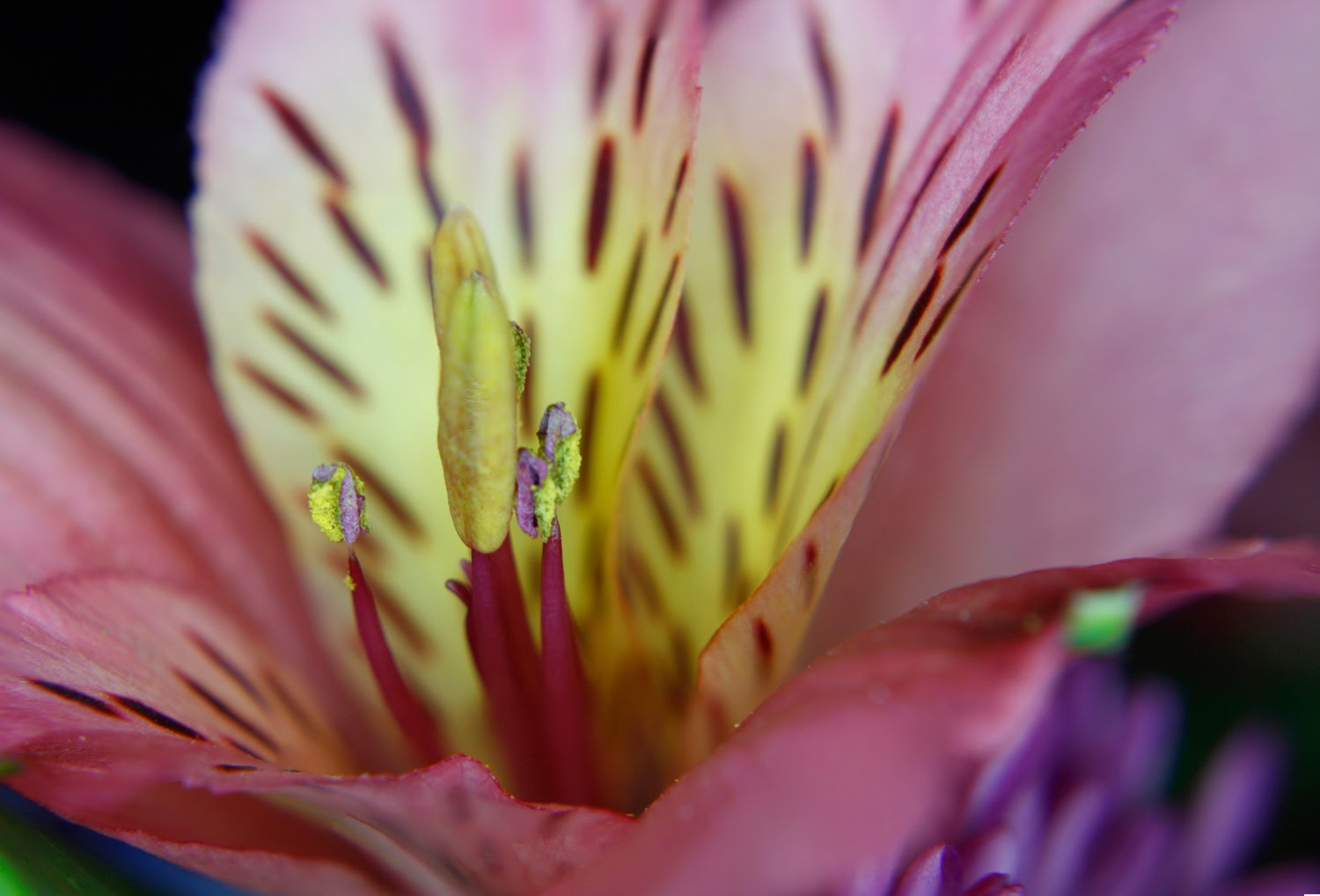 Focus Stacking for Close-Up Flower Photograph | Boost Your Photography