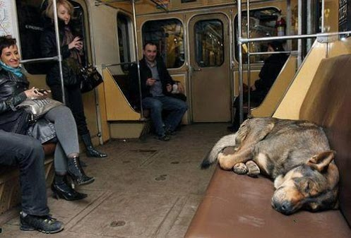 It's a dog's life.Automatic for the People: Dodo, Boulot, Metro