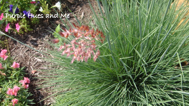 Crafting diy projects decorating for Ornamental grass that looks like wheat