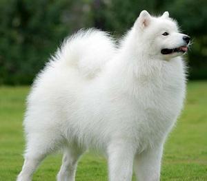 Animais: Os 8 cães mais lindos do mundo!