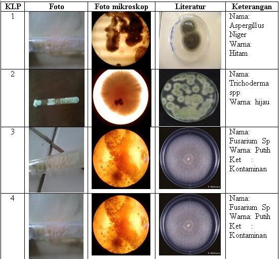 isolasi jamur golongan e laporan mikrobiologi Tanam nematoda dan jamur murni