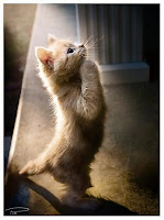 kucing, harapan, cita-cita