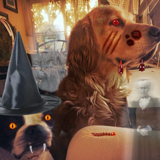 These Creepy Dogs will lick your face off