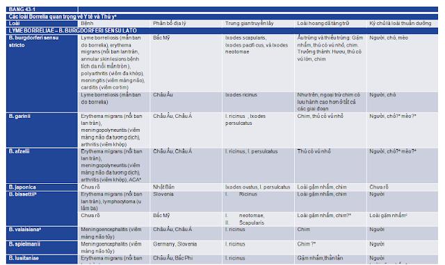 Hình 1: Các loài Borrelia quan trọng trong nhân y và thú y