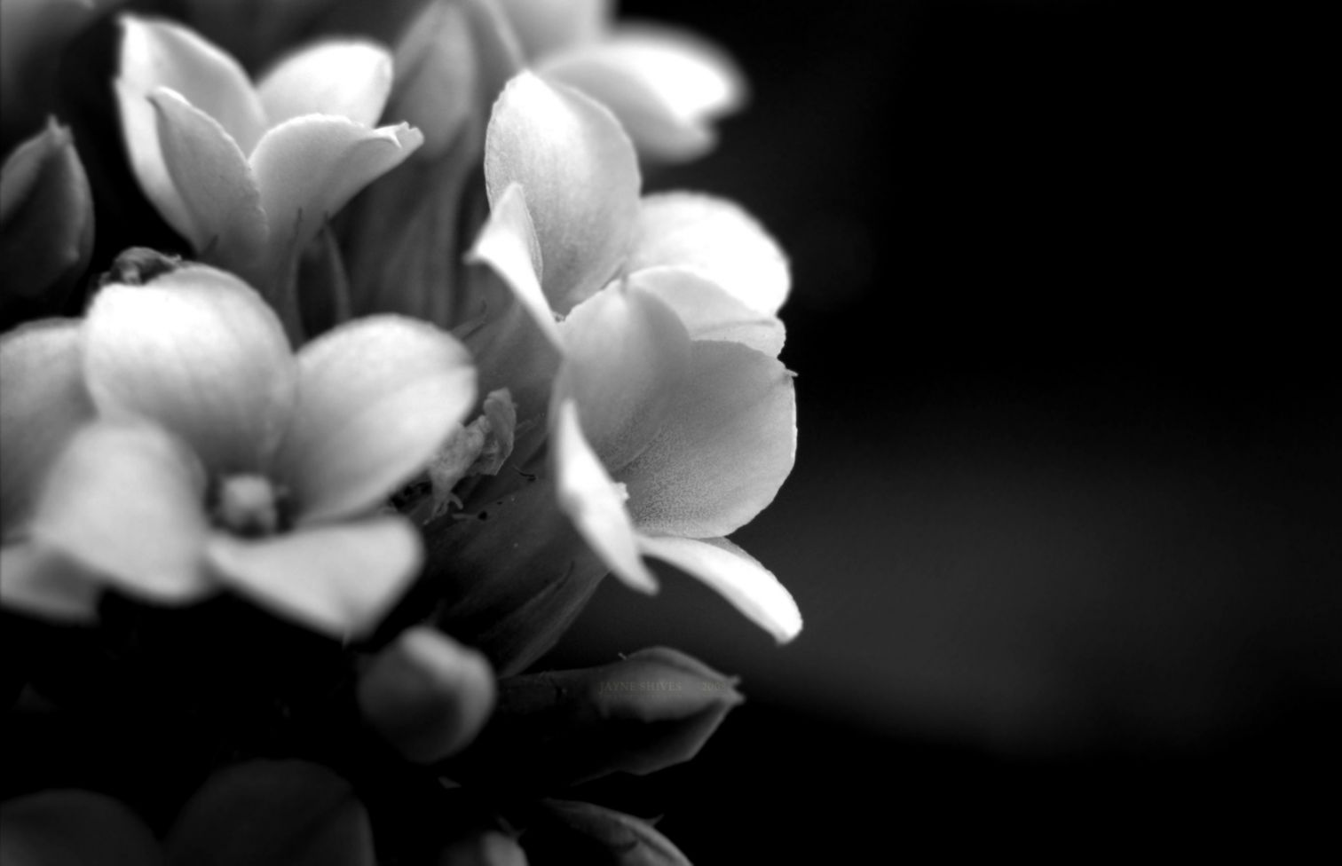 26052015   1920x1080px Black and White Fl Desktop Wallpapers