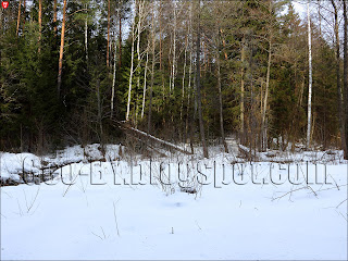 Бобровый лесоповал