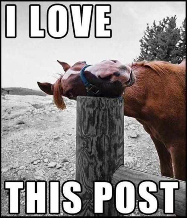 animal pictures with captions, i love this post