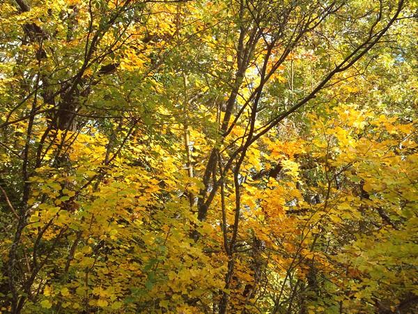 savoie aix-les-bains bourget lac grotte fées randonnée forêt corsuet