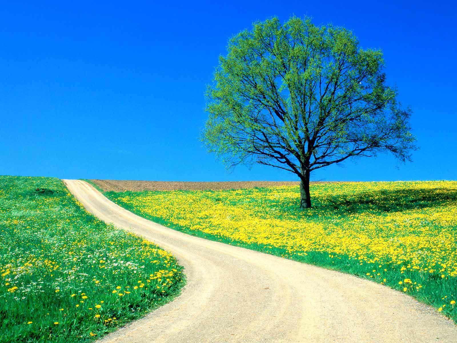 gambar jalanan terkeren wallpaper jalan di tengah bunga
