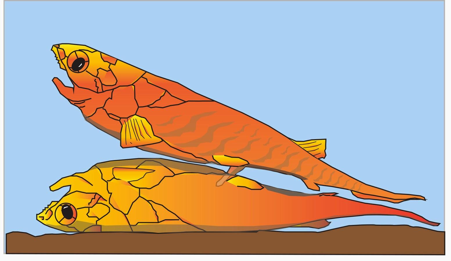 Ciencias de Joseleg: El pene de tiburones y rayas, el clasper