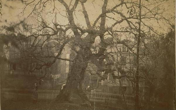 charter oak ct