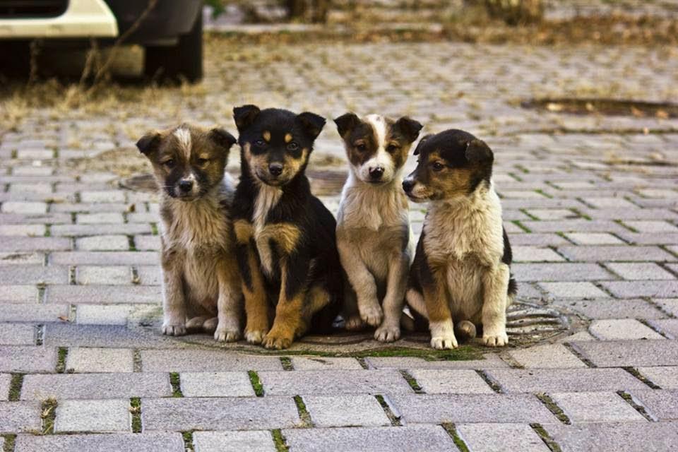 Картинки по запросу сходить в собачий приют с любимым