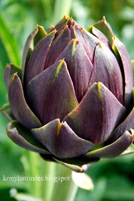 august-in-the-garden-artichoke