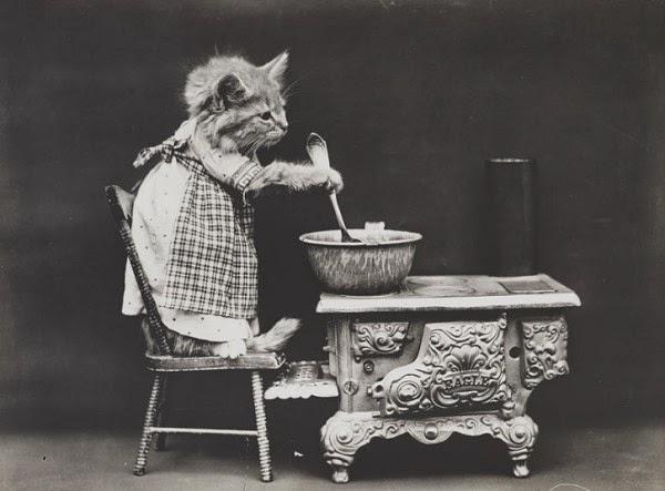 Фрис фотографировал своих собственных кошек Рэгса и Флаффа, а также домашних животных своих друзей и соседей