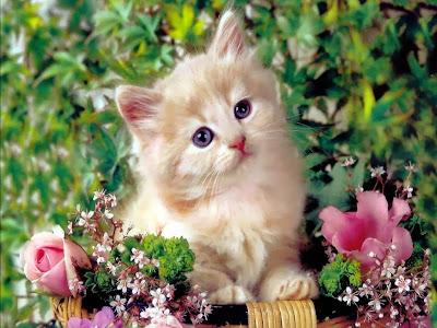 my precious kitty!