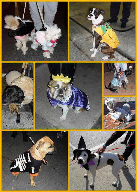 Halloween Dogs of Salem Massachusetts