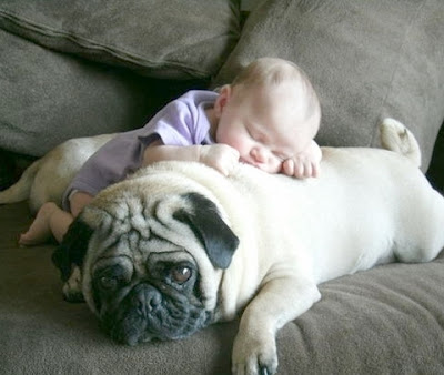 Download image of cute little kid sleeping with lovely pet dog