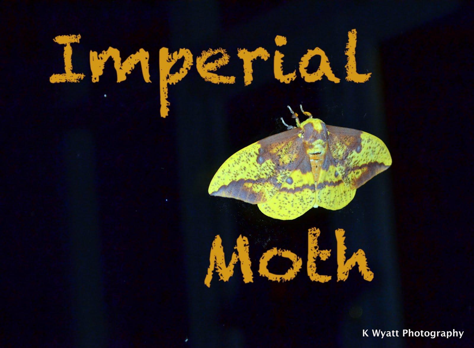 Westie julep imperial moth visit - Imperial westies ...