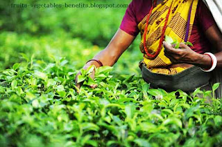 benefits_of_drinking_tea_everyday_fruits-vegetables-benefits.blogspot.com(benefits_of_drinking_tea_everyday_17)