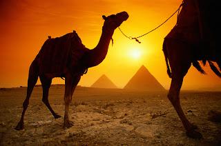 احذري يا مصر من ... الإخوان !