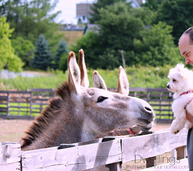 Donkey and Ellie-Mae amazed one by the other!