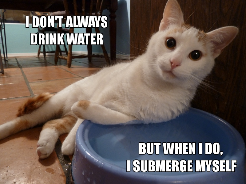 cat drinks water - I Don't Always Drink Water- But When I Do, I Submerge Myself