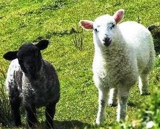 nilah dongeng untuk kanak kn2 tentang kerbau dan kambing seekor kerbau ...