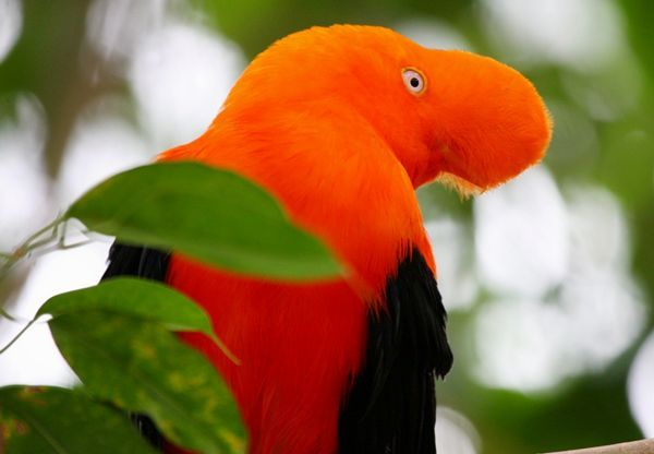 birds personals The parrot forum is an online parrot forum for bird enthusiasts how to teach parrot tricks come talk about all kinds of parrots, training, flight, and care on our message board.