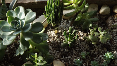 Plantas suculentas, floresta de suculentas com diversas espécies