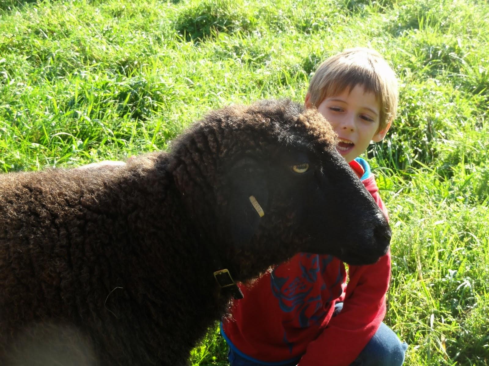 Martha, die liebe alte Schafdame