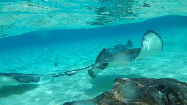 cayman island photos