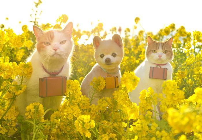 Фото 2 из Catmoji - социальная сеть для котов