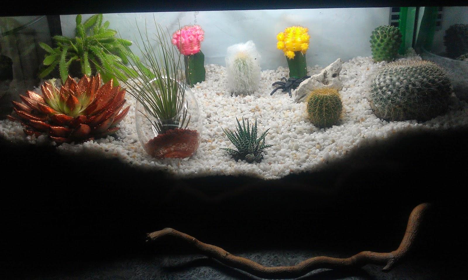 runars world kakteen und sukkulenten im aquarium. Black Bedroom Furniture Sets. Home Design Ideas