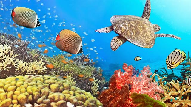 Imagenes de Tortugas y peces en un arrecife de coral